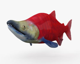 Sockeye Salmon HD 3D model
