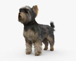 Yorkshire Terrier HD 3D model