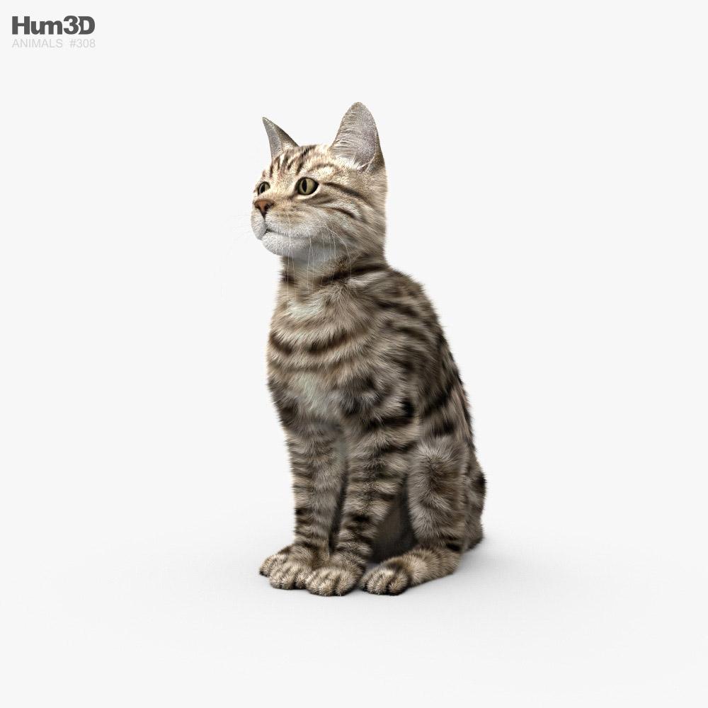 Sitting Cat HD 3D model