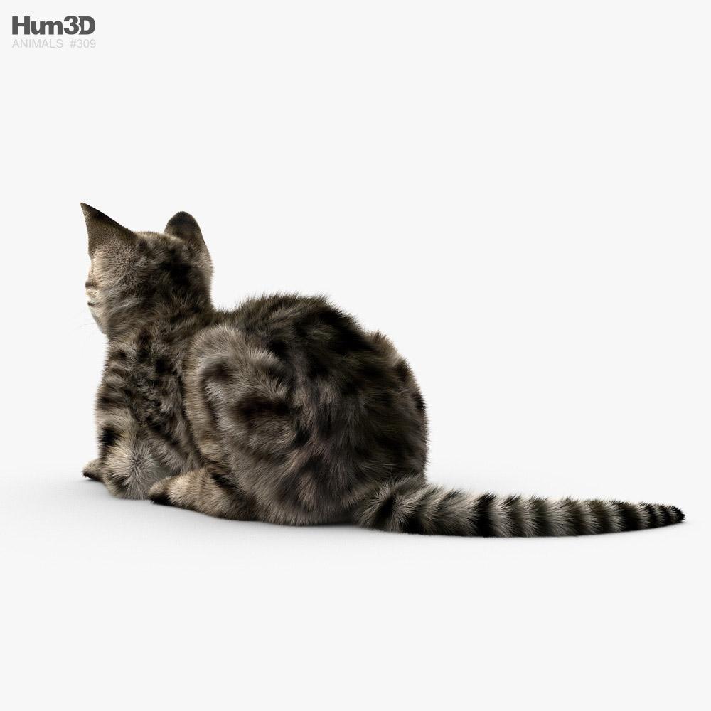 Lying Cat HD 3d model