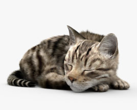 Sleeping Cat HD 3D model