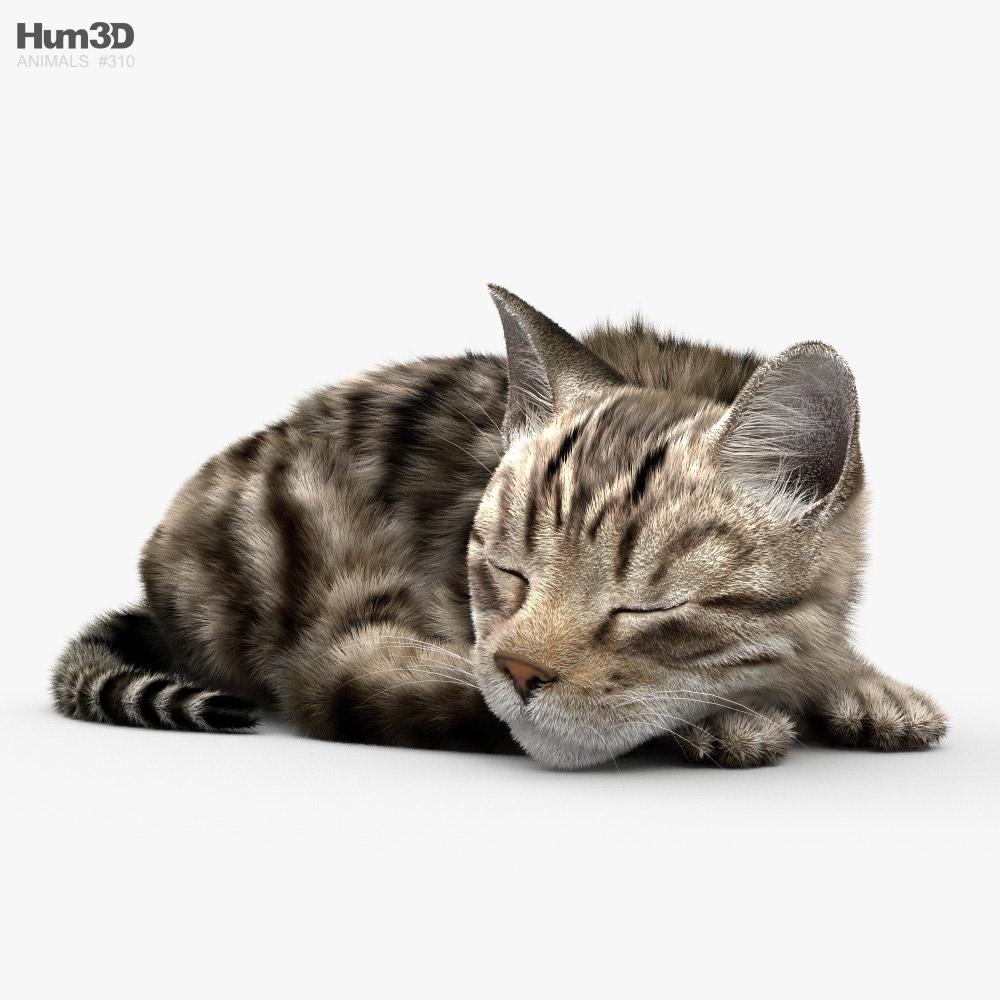Sleeping Cat HD 3D model