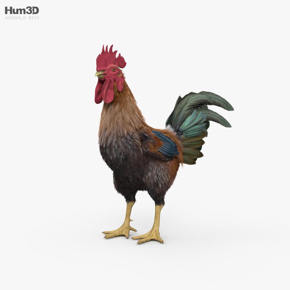 Rooster HD 3D model