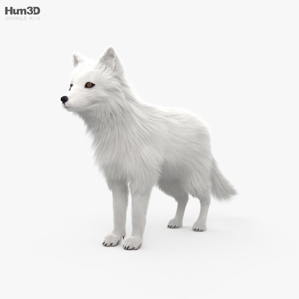 Arctic Fox HD 3D model