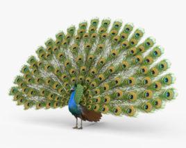 Peacock HD 3D model