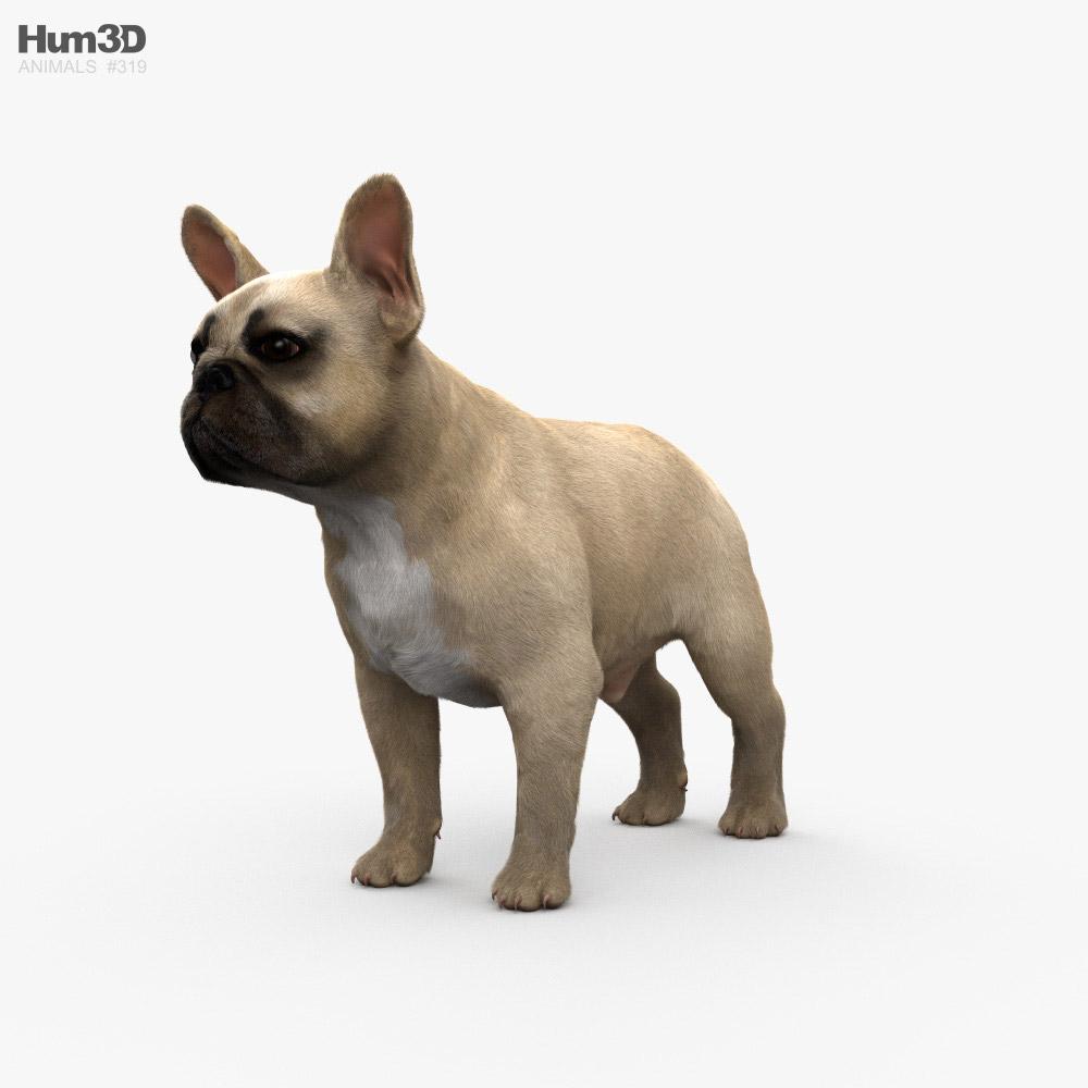 French Bulldog HD 3D model