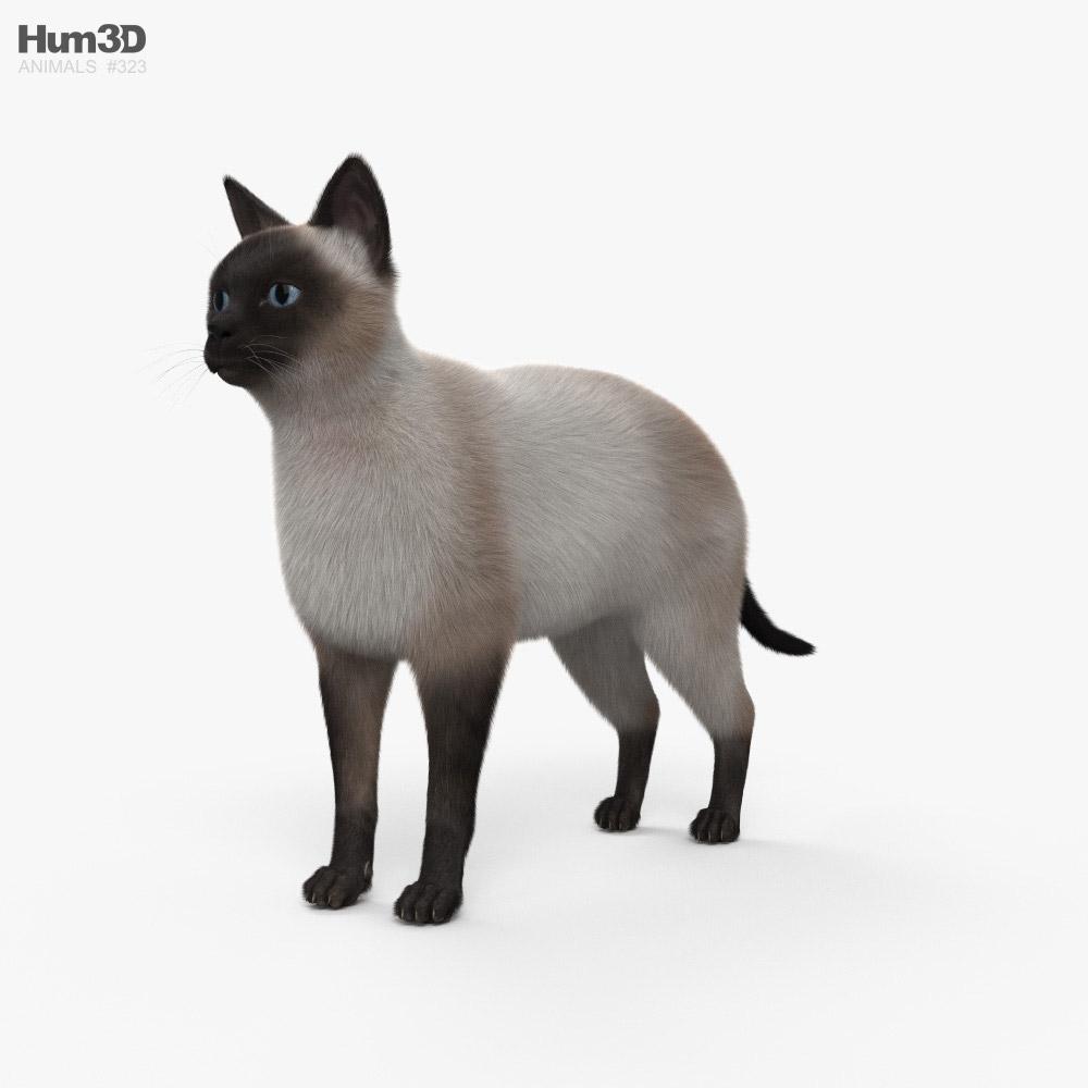 Siamese Cat HD 3D model