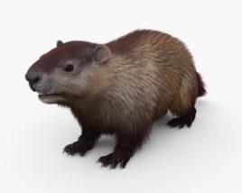 Groundhog HD 3D model