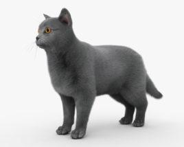 British Shorthair Cat HD 3D model