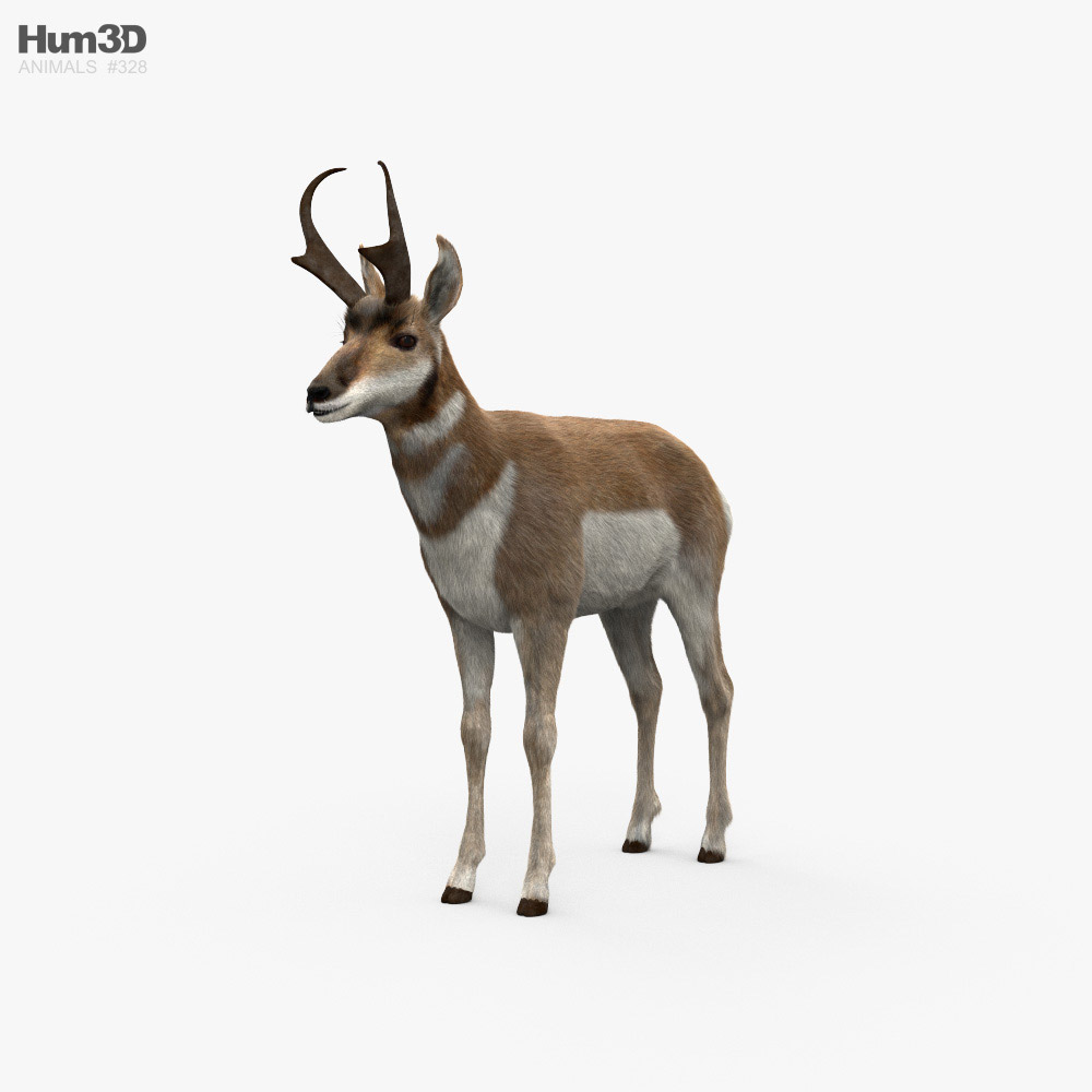 Pronghorn HD 3D model
