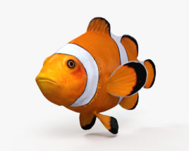 Clownfish HD 3D model