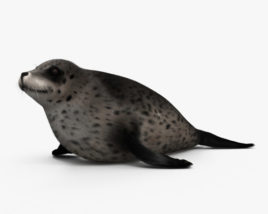 Spotted Seal HD 3D model