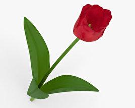 3D model of Tulip