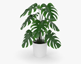 3D model of Monstera