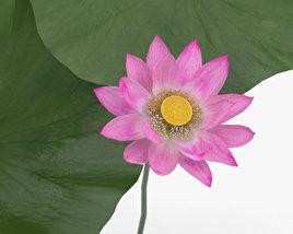 3D model of Lotus