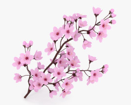 3D model of Cherry Blossom