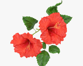 3D model of Hibiscus