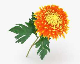 3D model of Chrysanthemum