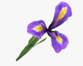 3D model of Iris