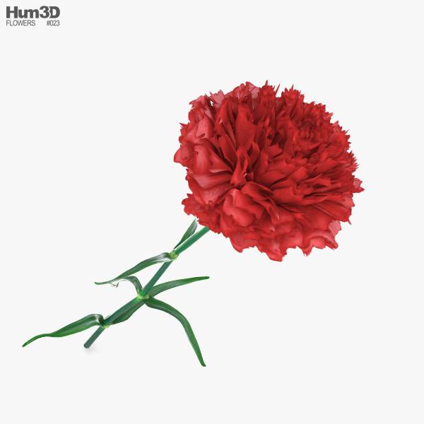 Carnation 3D model