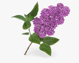 3D model of Lilac