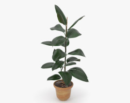 3D model of Ficus