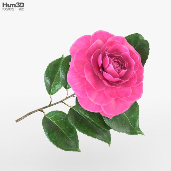 Camellia 3D model