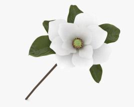 3D model of Magnolia