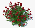 Rose Bush 3d model