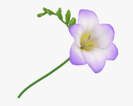 3D model of Freesia