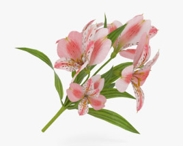 3D model of Alstroemeria