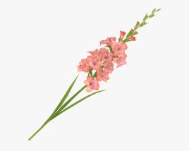 3D model of Gladiolus
