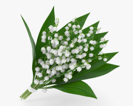 3D model of Lily of the valley