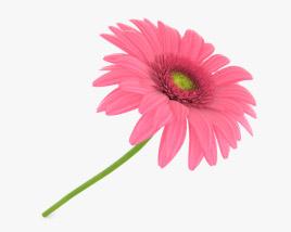 3D model of Gerbera Pink