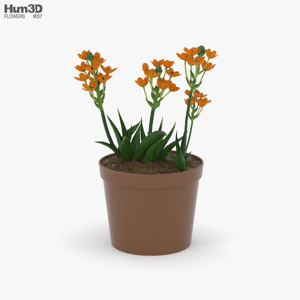 Star-of-Bethlehem flower 3D model