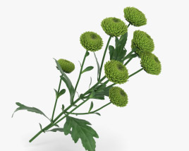 3D model of Santini Flower