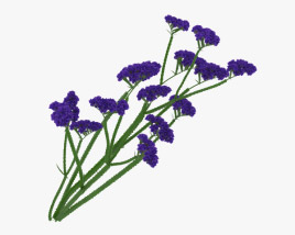3D model of Limonium Sinuatum