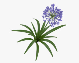 3D model of Agapanthus Africanus