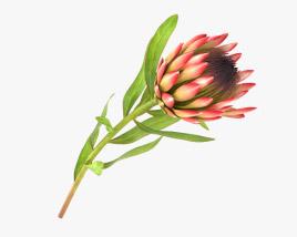 3D model of Protea