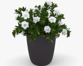 3D model of Gardenia
