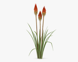 Kniphofia 3D model