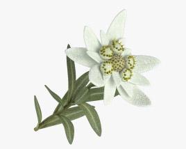 3D model of Edelweiss