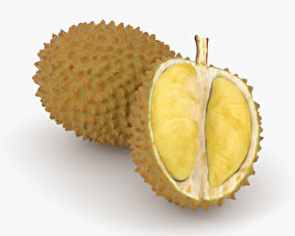 3D model of Durian