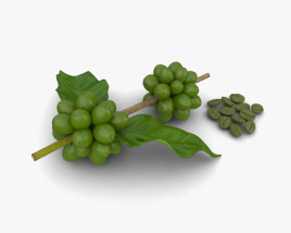 3D model of Green Coffee Beans