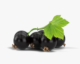 Blackcurrant 3D model