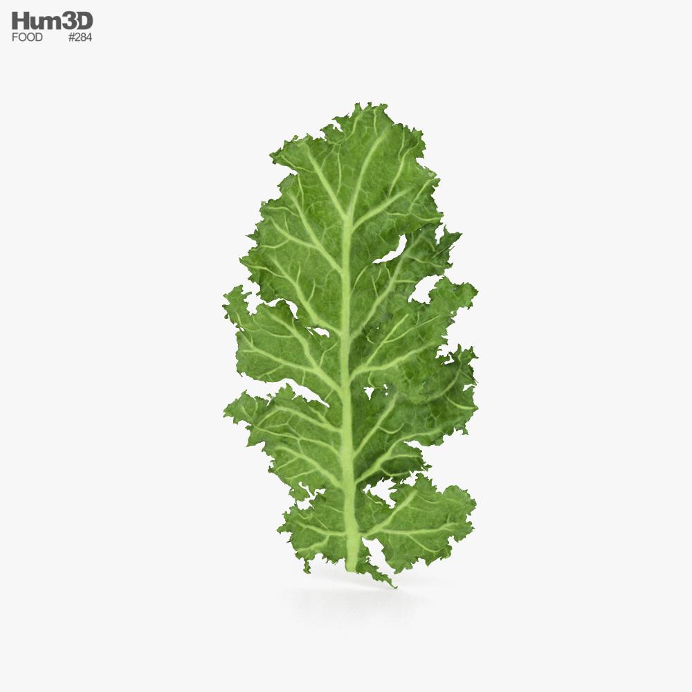 Kale 3D model