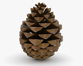 3D model of Pinecone