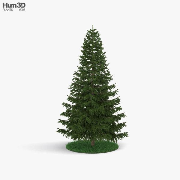 3D model of Pine