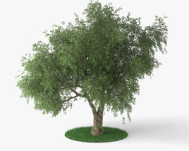 3D model of Olive Tree