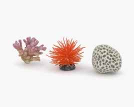 3D model of Coral